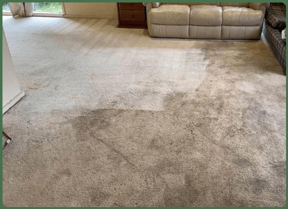 Safe Carpet Cleaning Nedlands Services